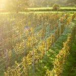 Weingut Domein Holset / Domein Holset Winery